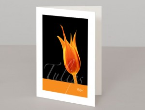 Tulip A5 Greetings Card