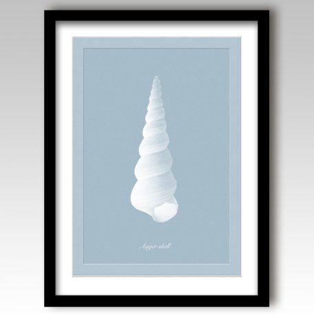 Auger Shell Art Print